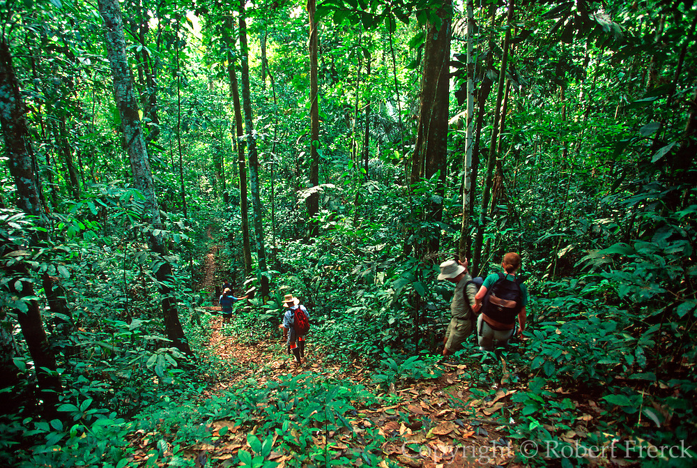 ECUADOR, AMAZON BASIN Napo River; hiking through rainforest