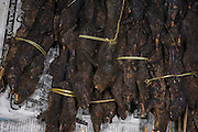 Smoked rats on skewers sold in market for food<br /> Apatani Tribe<br /> Ziro Valley, Lower Subansiri District, Arunachal Pradesh<br /> North East India