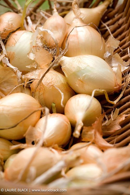 Onions in a basket.