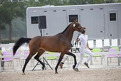 025, Meant To Be<br /> Nationaal Kampioenschap KWPN<br /> 3 jarige springmerries<br /> © Hippo Foto - Dirk Caremans<br />  15/08/2020