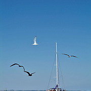 Catamaran in caribbean waters and birds. Isla Mujeres,Q.Roo.Mexico