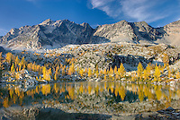 Alpine larches (Larix lyallii) and tarn below Mount Monica 3072 m (10079 ft), Purcell Mountains British Columbia