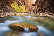 The Virgin River in the Zion Narrows, Zion National Park, Utah.