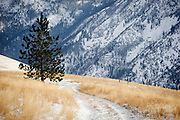 A lone pine tree on waterworks Hill in Missoula, Montana. Missoula Photographer, Montana Photographer, Pictures of Missoula, Montana Photos