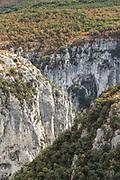 Rocky canyon with forest on top, Gorges du Verdon, Verdon Natural Regional Park, France