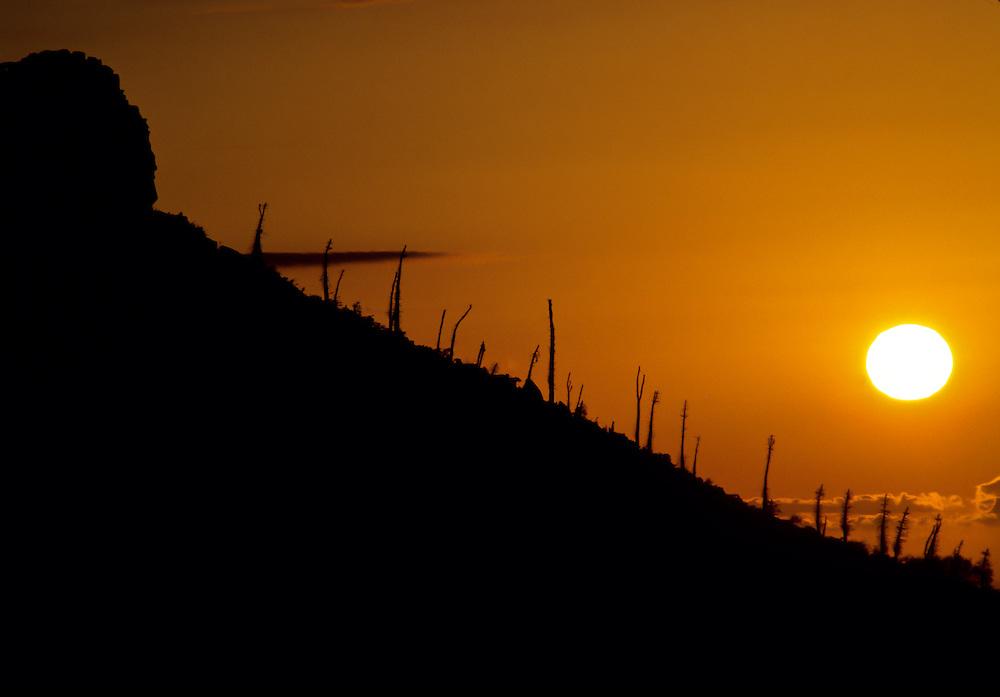 Trees against the sunset in Baja California.