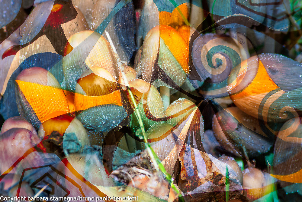 soft tones abstract dynamic image with curls,geometric round shapes and transparencies with mottled texture
