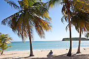 Lone person sits amount coconut palms on Sunbay beach in Vieques Island, Puerto Rico.