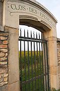 Vineyard. Clos des Epenaux. Pommard, Cote de Beaune, d'Or, Burgundy, France