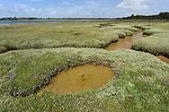 saltmarsh habitat, hampshire, hayling island