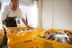 Unloading boxes of haddock