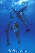 snorkelers and wild Atlantic spotted dolphins, Stenella frontalis, Little Bahama Bank, Bahamas MR 184, 185