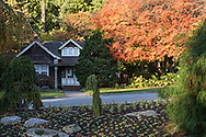 Fall foliage from a Japanese Maple tree (Acer japonica) next to the Rose Garden Cottage (built in 1914).  Photographed at Stanley Park in Vancouver, British Columbia, Canada