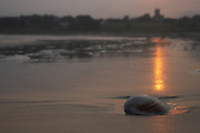 USA, Newport, RI - Clam shell on beach lit by last light of setting sun.