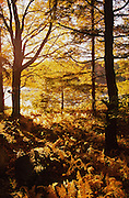 PA landscapes, Promised Land State Park, autumn