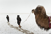 """Arab and Afzal, two young sons of the deceased Khan, are retruning the Qyzyl Qorum camp with Bactrian camels after loading up on """"Wuch"""", the winter fodder for the animals. They fetched it at the autumn camp, an hour walk away...Trekking through the high altitude plateau of the Little Pamir mountains, where the Afghan Kyrgyz community live all year, on the borders of China, Tajikistan and Pakistan."""