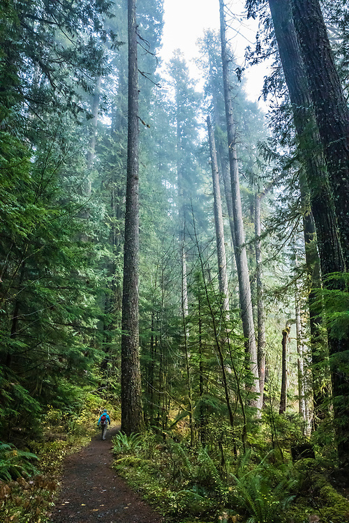 A woman hiking in the Staircase Rapids area of Olympic National Park, Washington, USA.