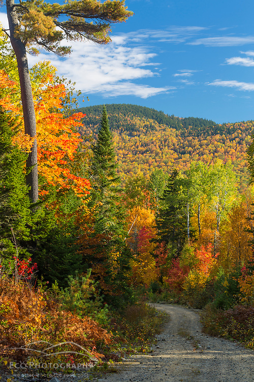 Fall. Dirt road in Maine's Katahdin Woods and Waters National Monument.