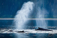 Whale Back and Blow