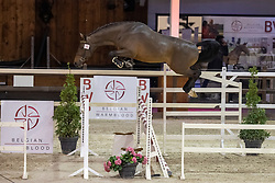 07119, Noble Lord<br /> BWP Hengstenkeuring 2021<br /> © Hippo Foto - Dirk Caremans<br />  13/01/2021
