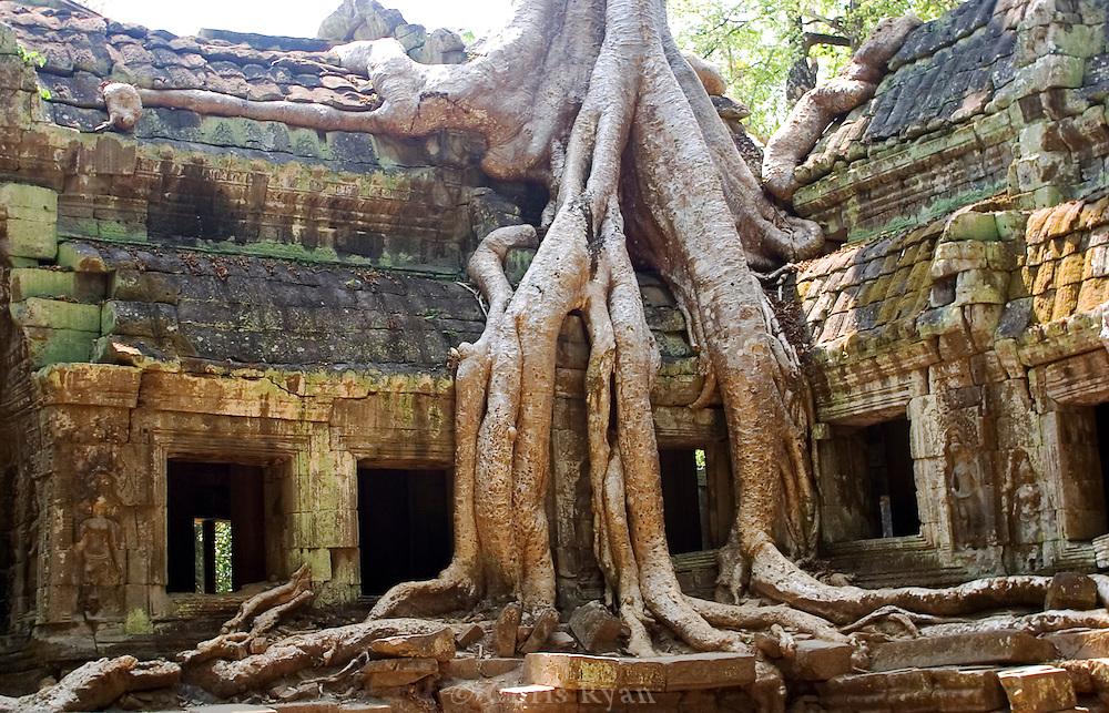 Banyan tree, Ta Phrom, Cambodia