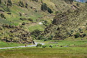 Quichua Indian on road<br /> Going to a minga<br /> Chimborazo Province<br /> Andes<br /> ECUADOR, South America