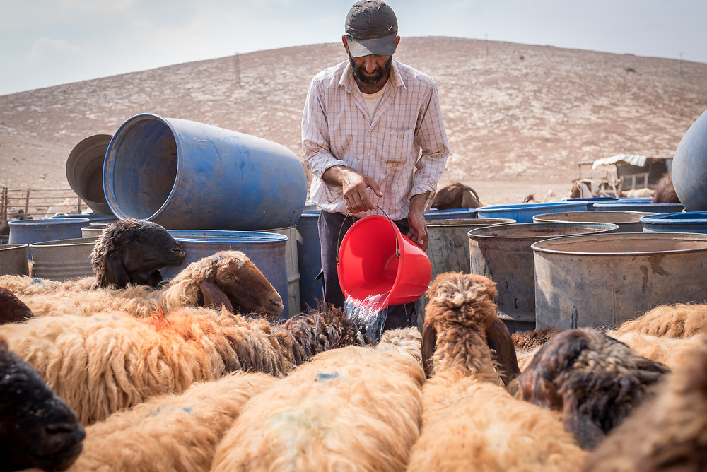 6 October 2018, Jordan Valley, West Bank, Occupied Palestinian Territories: Back from a day's grazing in the valley, shepherd Deab Abu Malek gives water to his sheep. Ecumenical Accompaniers from the World Council of Churches Ecumenical Accompaniment Programme in Palestine in Israel accompany shepherds in many parts of the West Bank, providing an international presence known to have a mitigating effect on confrontations between Israeli settlers and the Palestinians. EAs' presence also helps Palestinians access lands they otherwise might not have dared to continue to cultivate. In the West Bank's Area C, any land that isn't cultivated for a period of three years becomes property of the state, the shepherds explain, so accessing their lands regularly is vital for the communities and their herds.