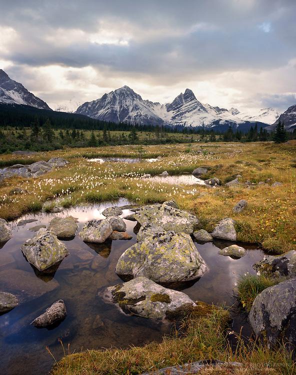 Wetlands in the Tonquin Valley Jasper National Park Alberta Canada
