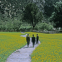CHINA, TIBET. Chinese tourists stroll on a path through mustard fields west of Bayi, along the road to Lhasa.