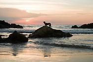 a dog at sea, Goa India