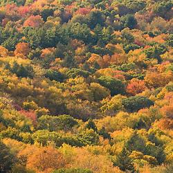 Fall in Skinner State Park, South Hadley, Massachusetts.