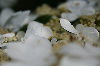 Closeup of white flowers