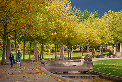 USA, Washington, Bellevue. Autumn leaves in Downtown Park.