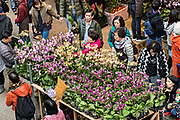 People gather around a fresh shipment of Orchids as they shop for flowering plants in the Mong Kok Flower Market of Kowloon, Hong Kong.