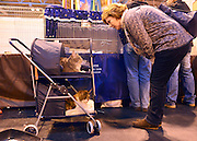 © Licensed to London News Pictures. 24/11/2012. Birmingham, UK A woman looks at two cats in their baskets ready to be transported home. Cats are shown by their owners and breeders at The Supreme Cat Show held by the Governing Council of Cat Fancy at the National Exhibition Centre in Birmingham today, 24 November 2012. The Cat Show is one of the largest cat contests in Europe with over one thousand cats being exhibited and judged. Photo credit : Stephen Simpson/LNP
