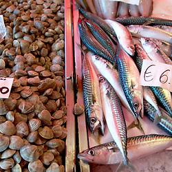 Fresh Sea Food & Fish - Clams, Mackeral - Chioggia - Venice Italy