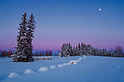 moonrise at dusk in winter<br /> Birds Hill Provincial Park<br /> Manitoba<br /> Canada