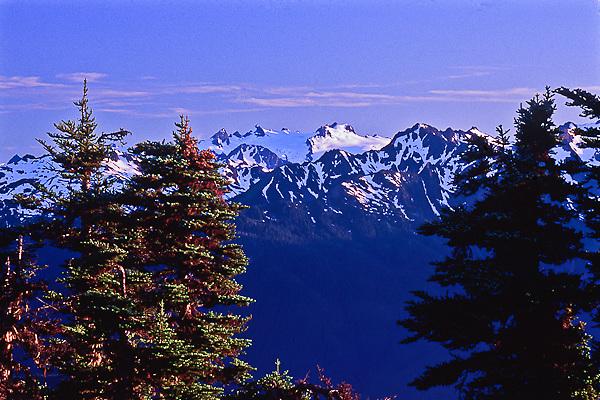 Mount Olympus as viewed from Hurricane Ridge.  Olympic National Park, Washington.