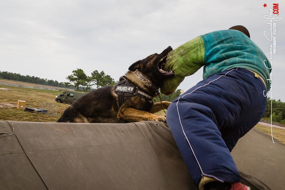 Démonstrations du Peloton de Soutien Cynotechnique Sud à l'occasion des Journées Portes Ouvertes du 13ème Régiment de Dragons Parachutiste au camp de Souge.<br /> Saut en parachute-tandem d'équipes cynophiles, exercices d'obéissance et démonstration du travail des chiens de guerre.<br /> Septembre 2014 / Martignas sur Jalle (33) / FRANCE