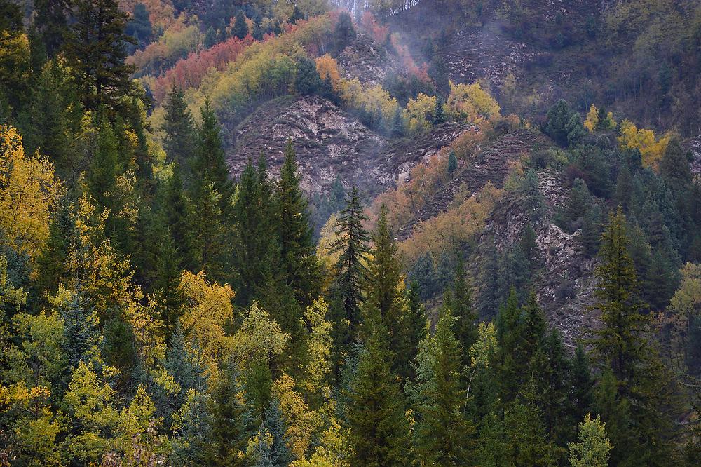 Mountain landscape with trees in fall colours, Hu Zhu Pass, Tibetan Plateau, Qinghai, China