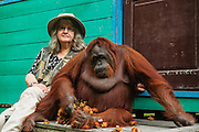 """A portrait of world renown """"Trimate"""" and primatologist Dr. Birute Mary Galdikas and Siswi, a habituated dominant female orangutan (Pongo pygmaeus) and """"friend"""" at Camp Leakey in Tanjung Puting National Park, Central Kalimantan, Borneo, Indonesia"""