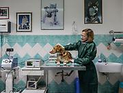 Oristano, Clinica Veterinaria due Mari, un cane durante il trattamento di chemio