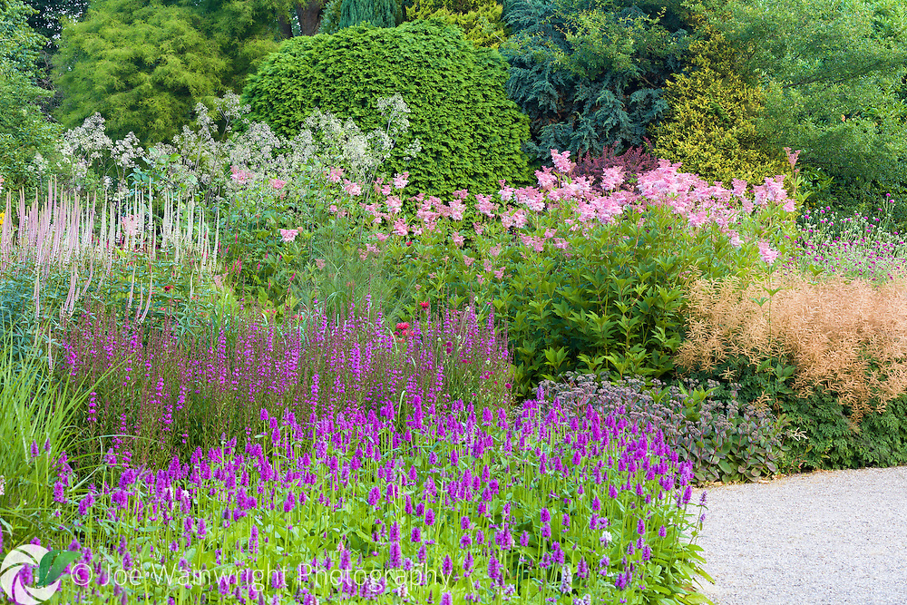 A colourful herbaceous border at Trentham Gardens, Staffordshire This image is available for sale for editorial purposes, please contact me for more information.