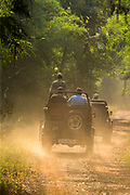 Tourists in safari vehicle driving on road among forest, Tadoba National Park, India