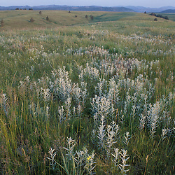 Mixed-grass prarie in South Dakota's Wind Cave National Park.