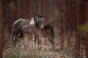 Turmalina_MG, Brasil...Egua e potro em Turmalina, Minas Gerais...Mare and foal in Turmalina, Minas Gerais...Foto: LEO DRUMOND / NITRO