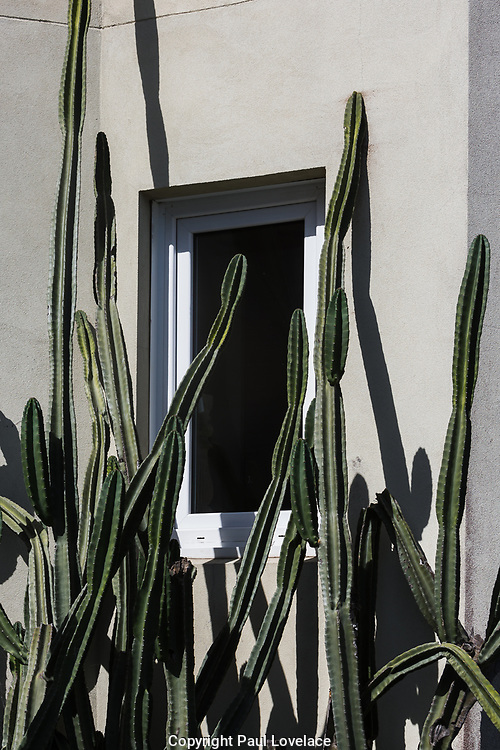 Sydney, Australia. Sunday 24th January 2021. Heatwave conditions hit Sydney this week. Cactus outside a Bondi Beach apartment.