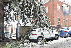 © Licensed to London News Pictures. 10/12/2017. London, UK. Heavy snow has caused a branch to fall down on a parked car as snow falls in Northwood, north west London.  The weather forecast predicts an accumulation of three to four inches with snow continuing to fall well into the afternoon.  Photo credit: Stephen Chung/LNP