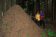 DEU, Deutschland: Fotografen Heidi und Hans-Juergen Koch an Ameisennest der Roten Waldameise (Formica polyctena) im Wald, Guenterfuerst, Erbach, Hessen | DEU, Germany:  Photographers Heidi and Hans-Jurgen Koch near a nest of European wood ants (Formica polyctena), Gunterfurst, Erbach, Hesse |