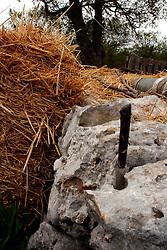 19\04\2009 In una stradina di campagna, tra Gioia del Colle e Putignano (prov.Ba), ritrovato  infilzato in un muretto a secco un coltello adoperato dal contadino per tagliare le reti che avvolgono gli imballi di  fieno, alimento di bovini, equini, caprini e ovini...In Puglia, ancora oggi, persistono realtà autentiche e genuine: flora e fauna sono gli ingredienti base delle masserie che con i loro muretti a secco costellano il territorio del tacco d' Italia. Qui l'allevamento è una delle attività principali, ieri come oggi, che il massaro porta avanti quotidianamente con pazienza e devozione. La masseria delle Murge è abitata da equini, bovini, ovini ecc. che sono il motore della produzione alimentare come per esempio la tipica mozzarella. Entriamo quindi in un'atmosfera bucolica che ci fa respirare odori, gustare sapori e ammirare colori che identificano il territorio. Buon viaggio dei sensi..
